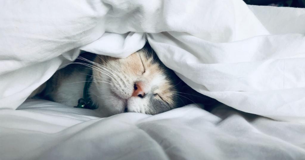 男性不妊対策6:良質な睡眠