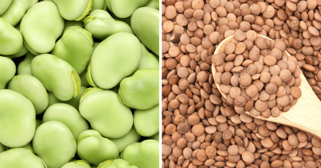 そら豆やレンズ豆にも亜鉛が含まれる